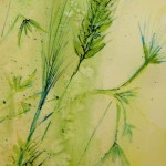 Watercolour painting. Grass Seed Heads (RWB0061). Artist: Vandy Massey