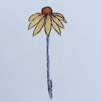 Watercolour painting. Rudbekia (IOA030). Artist: Ingrid Ormestad