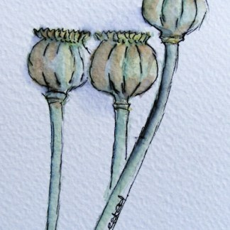 Watercolour painting. Next Year's Poppies (IOA032). Artist: Ingrid Ormestad