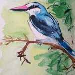 Watercolour painting. Woodland Kingfisher (LBA018) Artist: Lori Bentley
