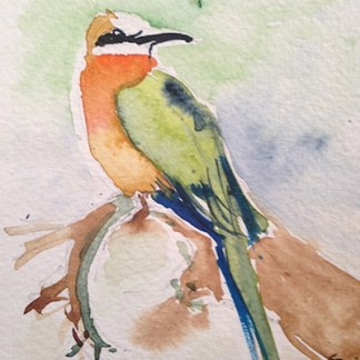 Watercolour painting. African Bee Eater (LBA019) Artist: Lori Bentley