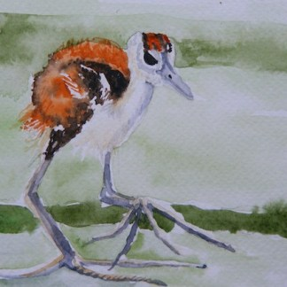 Watercolour Painting. Little Wader (LBA027). Artist: Lori Bentley