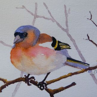 Watercolour painting. Chaffinch (RRA002) Artist: Ros Ridley
