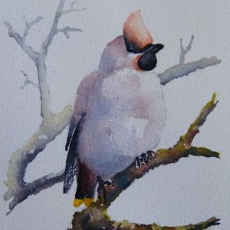 Watercolour painting. Waxwing (RRA003) Artist: Ros Ridley