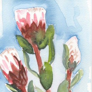 Watercolour painting. LBA048 Proteas. Artist: Lori Bentley