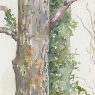 Watercolour painting. JBA011 Wood and Leaf. Artist: Judy Barends