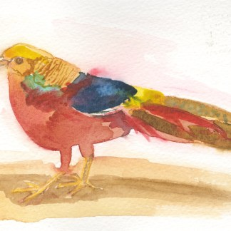 Watercolour painting. LBA050 Golden Pheasant. Artist: Lori Bentley