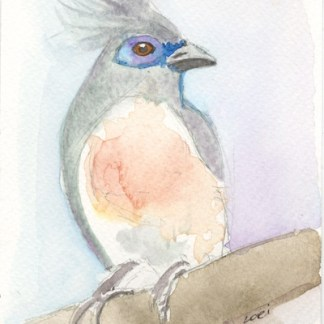 Watercolour painting. LBA055 Crested Coua. Artist: Lori Bentley