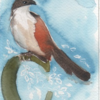 Watercolour painting. LBA060 Burchell's Coucal. Artist: Lori Bentley