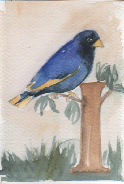 Watercolour painting. LBA066 Village Indigo Bird. Artist: Lori Bentley