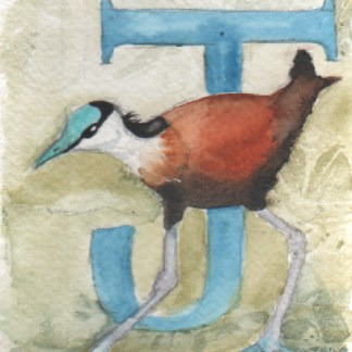 Watercolour painting. LBA067 African Jacana. Artist: Lori Bentley