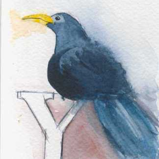 Watercolour painting. LBA082 Chattering Yellowbill. Artist: Lori Bentley