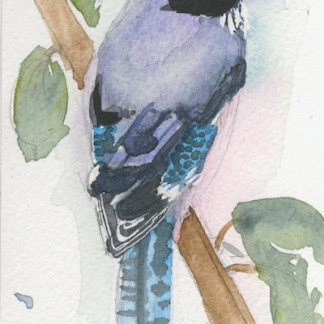 Watercolour painting. LBA085 Black-headed Jay. Artist: Lori Bentley