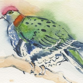 Watercolour painting. LBA088 Superb Fruit Dove.