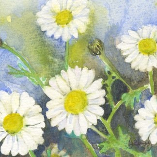 Watercolour painting. LJB002 - Daisy Day. Artist: Lindsay Berry