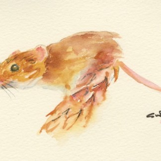 Watercolour painting. SWA006 - Harvest Mouse.
