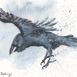 Watercolour painting. SWA009 - Raven.