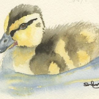 Watercolour painting. SWA015 - Mallard chick.