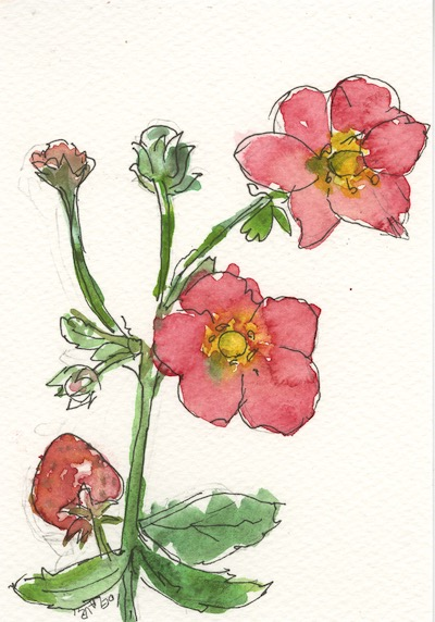 Watercolour painting. IFA003 Strawberry. Artist: Isabel Frias de la Uz