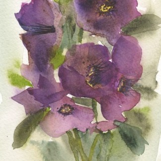 Watercolour painting. RWB0240 Helebore Posy.