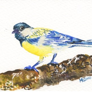 Watercolour painting. MCA001 Blue Tit. Artist: Margot Cornish