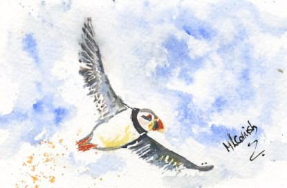 Watercolour painting. MCA007 Flying Puffin. Artist: Margot Cornish