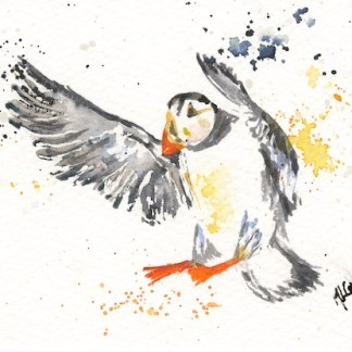 Watercolour painting. MCA008 Puffin Coming in to Land. Artist: Margot Cornish