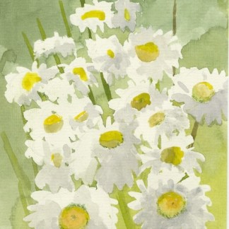 Watercolour painting. GWA001 Ox-Eye Daisies. Artist: Gillie Whittle