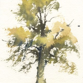 Watercolour painting. SBU014 Sunlit Boughs. Artist: Stephie Butler