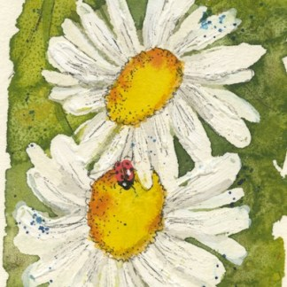 Watercolour painting. CFA008 Ox-eye Daisies II. Artist: Caroline Furlong