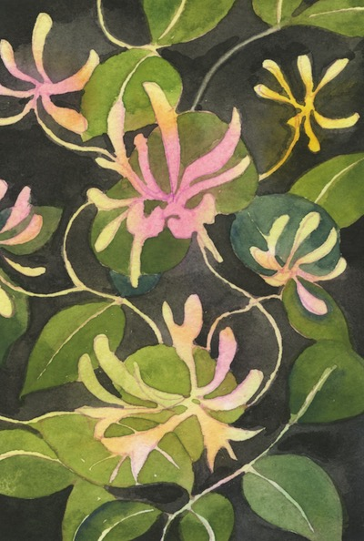 Watercolour painting. HO008 Honeysuckle. Artist: Helen Otter