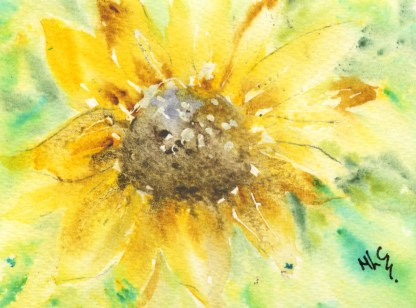 Watercolour painting. MCA025 Sunflower. Artist: Margot Cornish