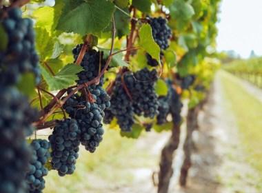 wijn marathon