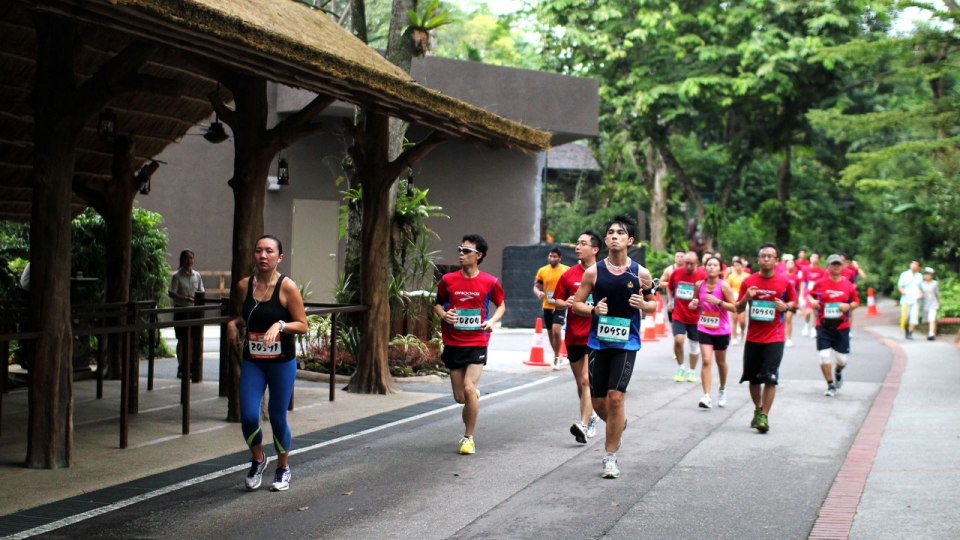 Safari Zoo Run 2013: Let Animals and Nature Charm You