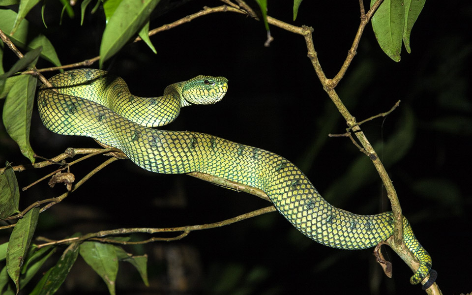 A Trail Runners Guide to Five Dangerous Animals in Malaysia