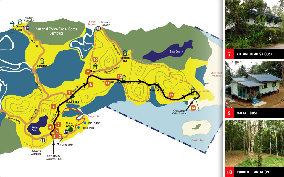 The Tree Trail at Pulau Ubin Running Trails, Expect Surprises!