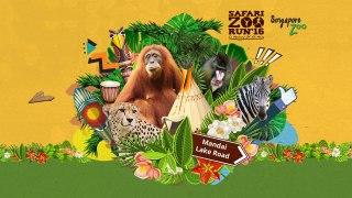 Safari Zoo Run 2016