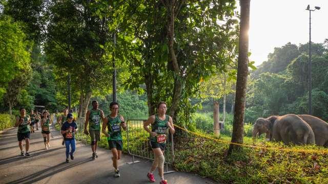 Safari Zoo Run 2020: Don't Miss the Last Edition to Run in the Zoo
