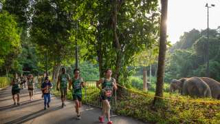 Safari Zoo Run 2020: Don't Miss the Last Edition to Run in the Zoo