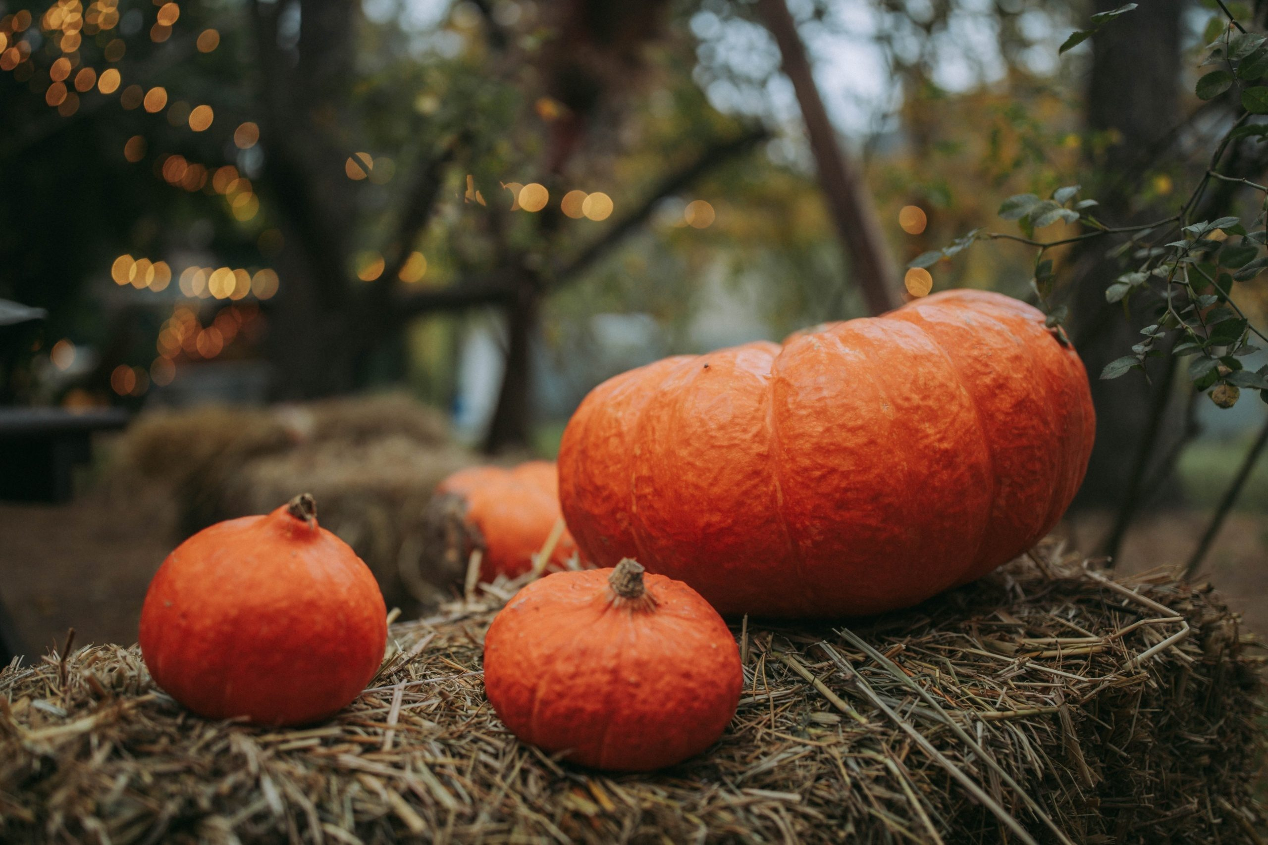 pumpkins on top of hay - 5 Best Fall Decorations That Will Make Your Neighbors Jealous