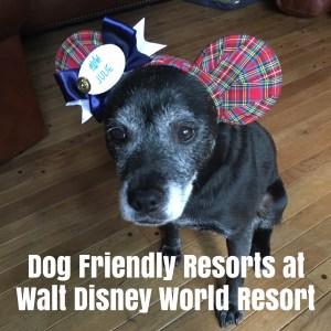 Dog Friendly Walt Disney World Resorts