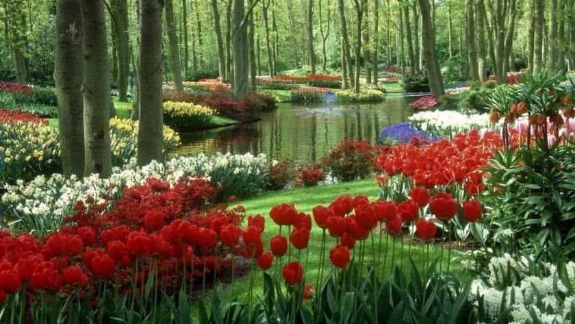 حديقة كيوكنهوف أجمل حديقة في العالم 6