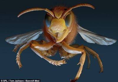 تحت الميكرسكوب : شاهد عالم الحشرات كما لم تراه من قبل ! 4