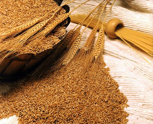 فوائد جنين القمح وطريقة تحضيره