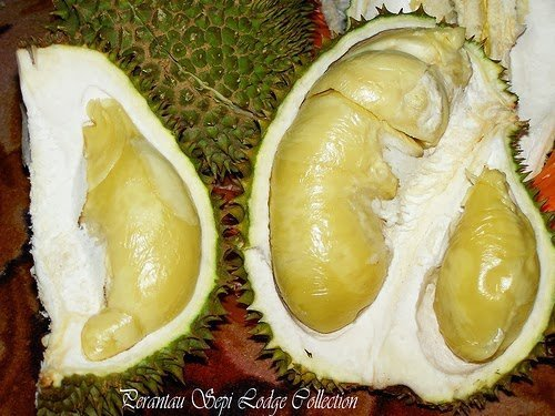 فوائد فاكهة الدوريان : اغرب فاكهة في العالم !