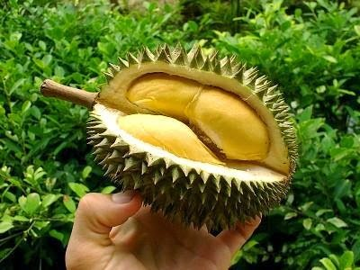 تعرف علي فوائد فاكهة دوريان : اغرب فاكهة في العالم ! 1