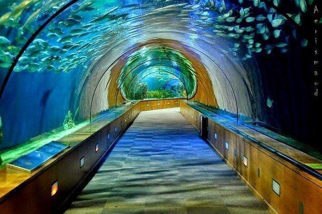 أكبر و أهم 10 أحواض زجاجية للأسماك في العالم ! 5