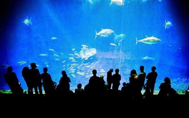 أكبر و أهم 10 أحواض زجاجية للأسماك في العالم ! 7