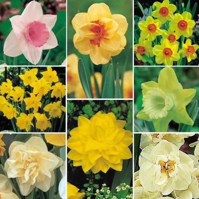 أحصل على أزهارك المفضلة مجاناً 2