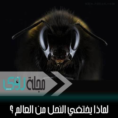 لماذا يختفي النحل من العالم ؟ 1